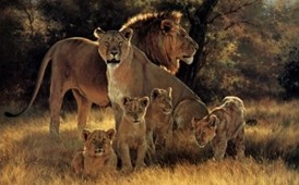 photo of a lion family